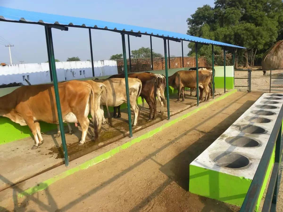 Manrega Cow Shed scheme